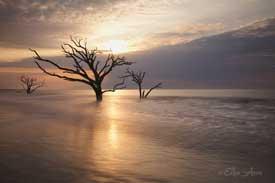 EAnon_trees-275px